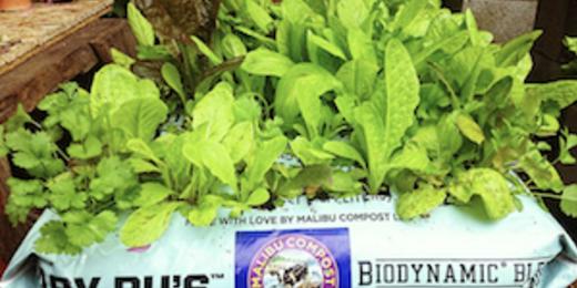 Malibu compost wefunder